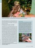 FLIEGENDE JUWELEN - Naturhistorisches Museum Wien - Seite 7