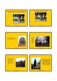 Gestione della sicurezza dell'albero - Archivio Rete Poli