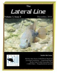 Lateral Line November 2010 - Hill Country Cichlid Club