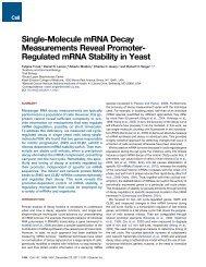 Regulated mRNA Stability in Yeast