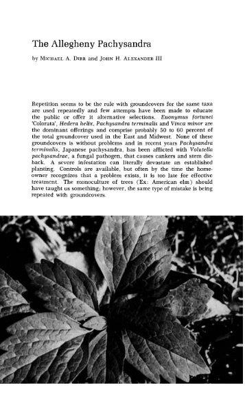 The Allegheny Pachysandra - Arnoldia