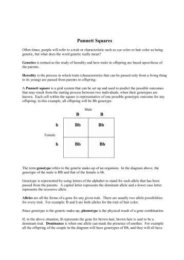 punnett square worksheet human characteristics answers the best and most comprehensive worksheets. Black Bedroom Furniture Sets. Home Design Ideas