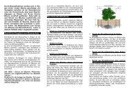 Baumschutz auf Baustellen - NABIS e.V.