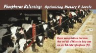 Phosphorus Balancing: Optimizing Dietary P Levels