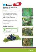 Ratgeber Weinbau - Syngenta - Seite 3