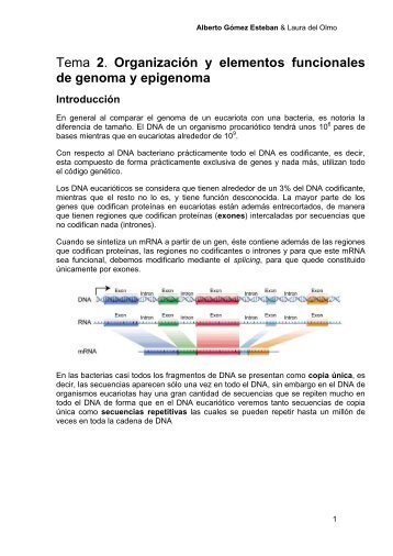 Tema 2. ORGANIZACION GENOMA ... - VeoApuntes.com