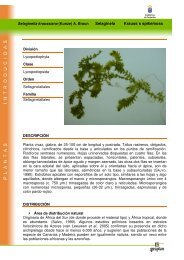 Selaginela Krauss´s spikemoss - Interreg Bionatura