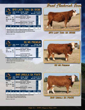 Page 31 - Buzzard Hollow Ranch