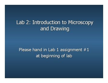 BR Lab 2 Microscopy and Drawing 1.pptx