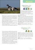 rAntGroen 45 - Zuidrand - Page 7