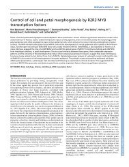 Control of cell and petal morphogenesis by R2R3 MYB transcription ...