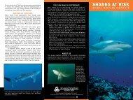 SHARKS AT RISK - Animal Welfare Institute