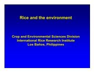 Rice and the environment - Rice Knowledge Bank - International ...