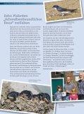 NiKK Naturschutz im Kreis Kleve - NABU Kleve e.V. - Seite 4