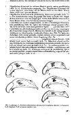 Diagnose und Faunistik von Bembidion-Arten der Untergattung ... - Page 5