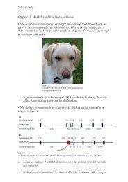 Opgave 3. Muskelsvind hos labradorhunde