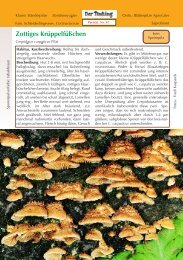 Zottiges Krüppelfüßchen Crepidotus carpaticus - Tintling