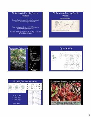 Estrutura de populações vegetais: padrão espacial