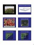 Estrutura de populações vegetais: padrão espacial - Page 2