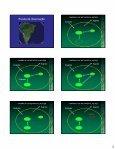 Estrutura de populações vegetais: padrão espacial - Page 3
