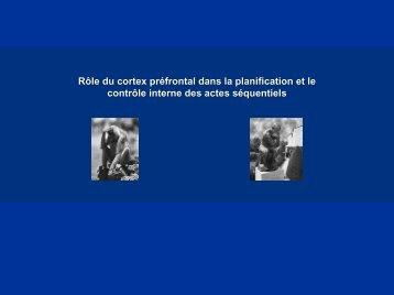 Role du cortex préfrontal dans la planification et le contrôle interne