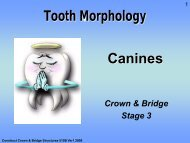 Tooth Morphology Canines - Randwick College Wiki