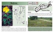Rockrose - Species at Risk