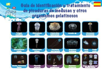 26.Jellyfish Guide 2014 - Spain (spanish)