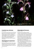 Schätze aus dem Botanischen Garten Wien - Seite 6
