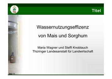 Wassernutzungseffizienz von Mais und Sorghum - TLL