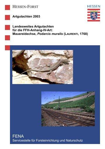 Mauereidechse, Podarcis muralis - Landesbetrieb Hessen-Forst