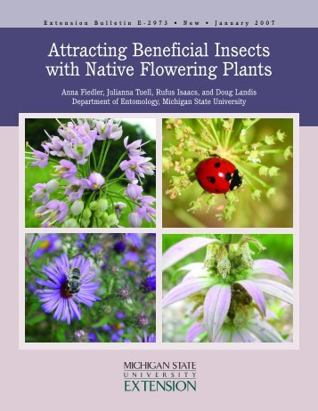 Attracting Beneficial Insects with Native Flowering Plants - Michigan