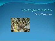 Cycad germination