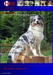 Neue Partner von Absolut-Hund