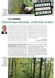 Schutzwald gegen Steinschlag – Ist Holz härter als Stein? - Planat
