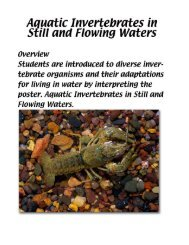 Aquatic Invertebrates in Still and Flowing Waters