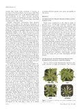 Zeaxanthin Deficiency Enhances the High Light ... - Plant Physiology - Page 2