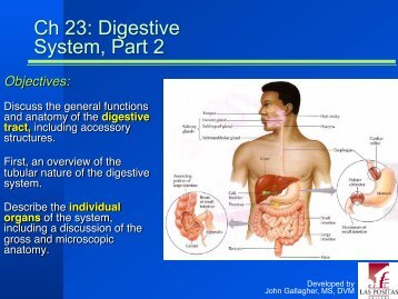 Chapter 23 - Digestive System, Part 2