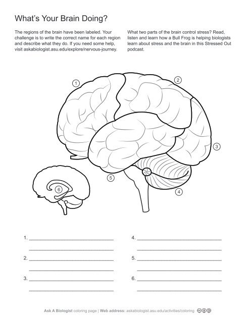 Ask A Biologist - What's Your Brain Doing? - Worksheet Activity