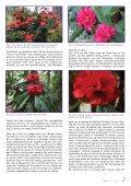 Utgave nr 2 - Den norske Rhododendronforening - Page 7