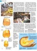 Lemn si hartie.pdf - Page 2