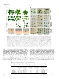 Functional Characterization of PaLAX1, a Putative - Plant Physiology - Page 5