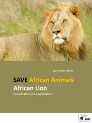 African Lion - SAVE Wildlife Conservation Fund
