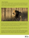 African Lion - SAVE Wildlife Conservation Fund - Page 2