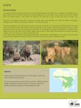African Lion - SAVE Wildlife Conservation Fund - Page 4