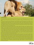 African Lion - SAVE Wildlife Conservation Fund - Page 5