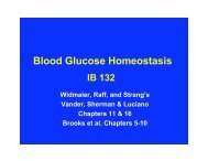 Outline:Blood Glucose Homeostasis - PageOut