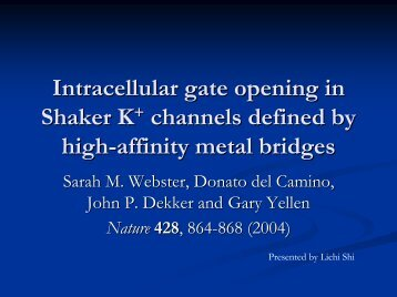Intracellular gate opening in Shaker K+ channels defined by high ...