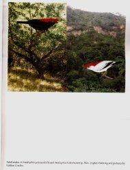 PDF da revista completa - Sociedade Brasileira de Ornitologia