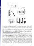 Cyclic AMP-dependent phosphorylation of neuronal nitric oxide ... - Page 3